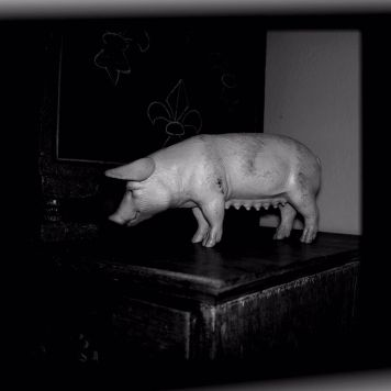 This little piggy stayed at home 17042012