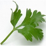 Italianparsley-150x150