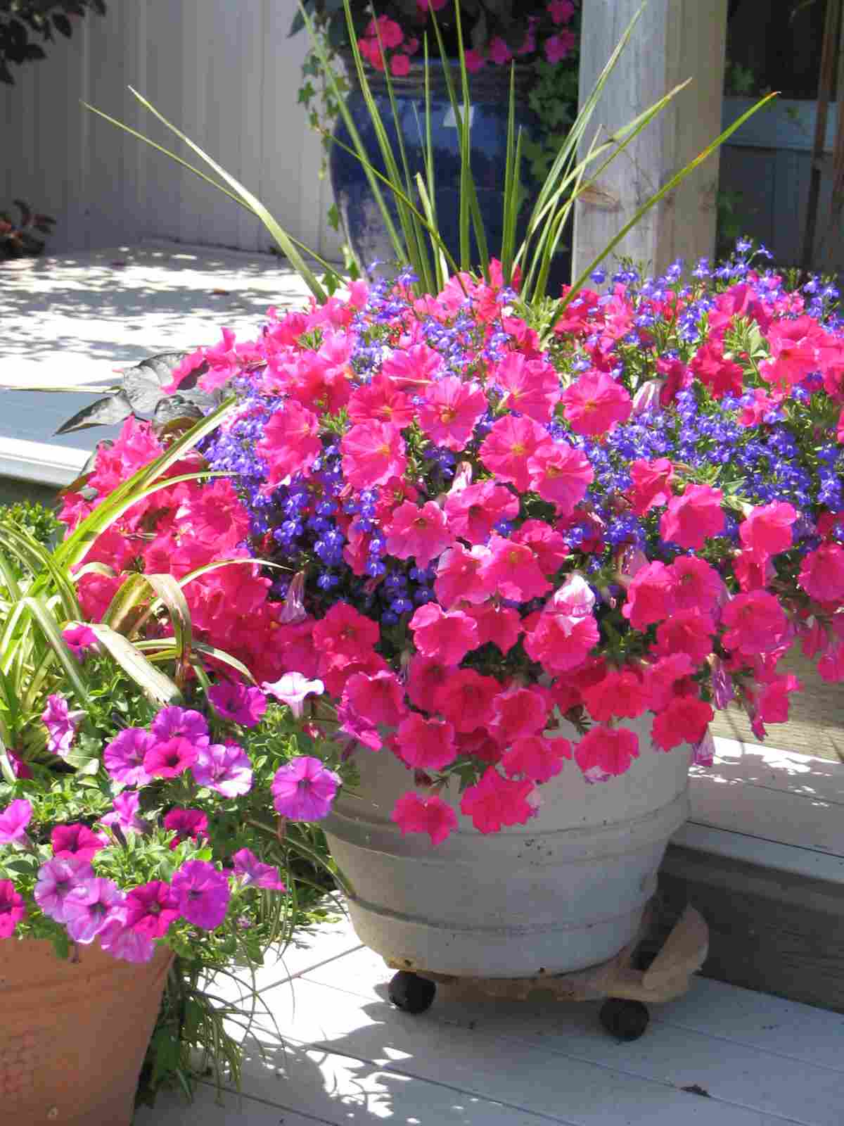 Poetry Bowl of Petunias  Bread Crumbs  Cold Gray