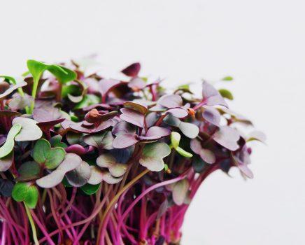 Les graines germées pour booster votre vitalité
