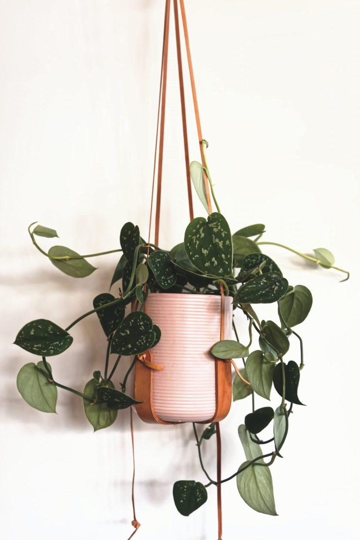 Une plante est considérée comme dépolluante grâce à sonmétabolisme qui lui permets de réduire la quantité des polluants présents dans l'air.