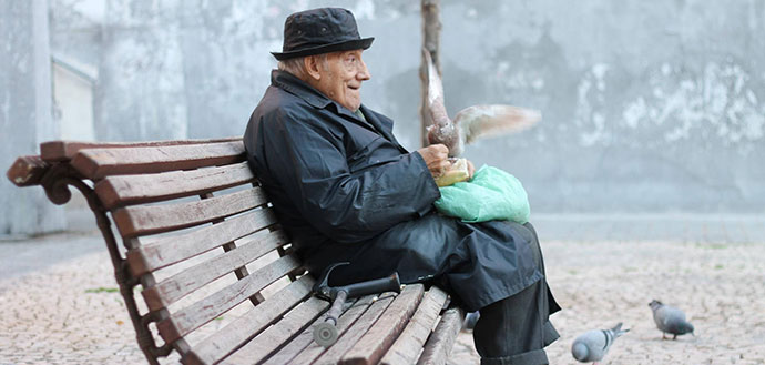 aging man on bench with pigeon