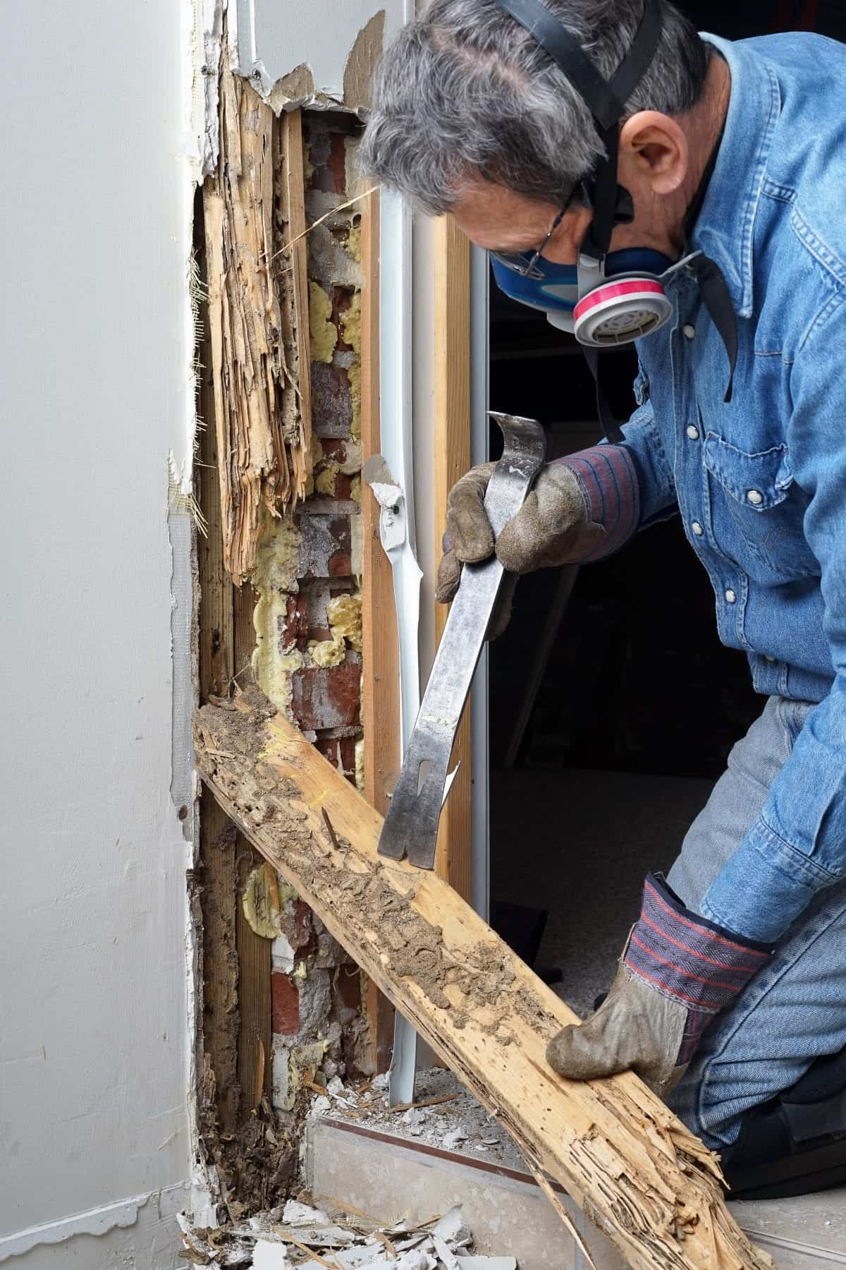 Termite-service-near-me-Jackson-Termite