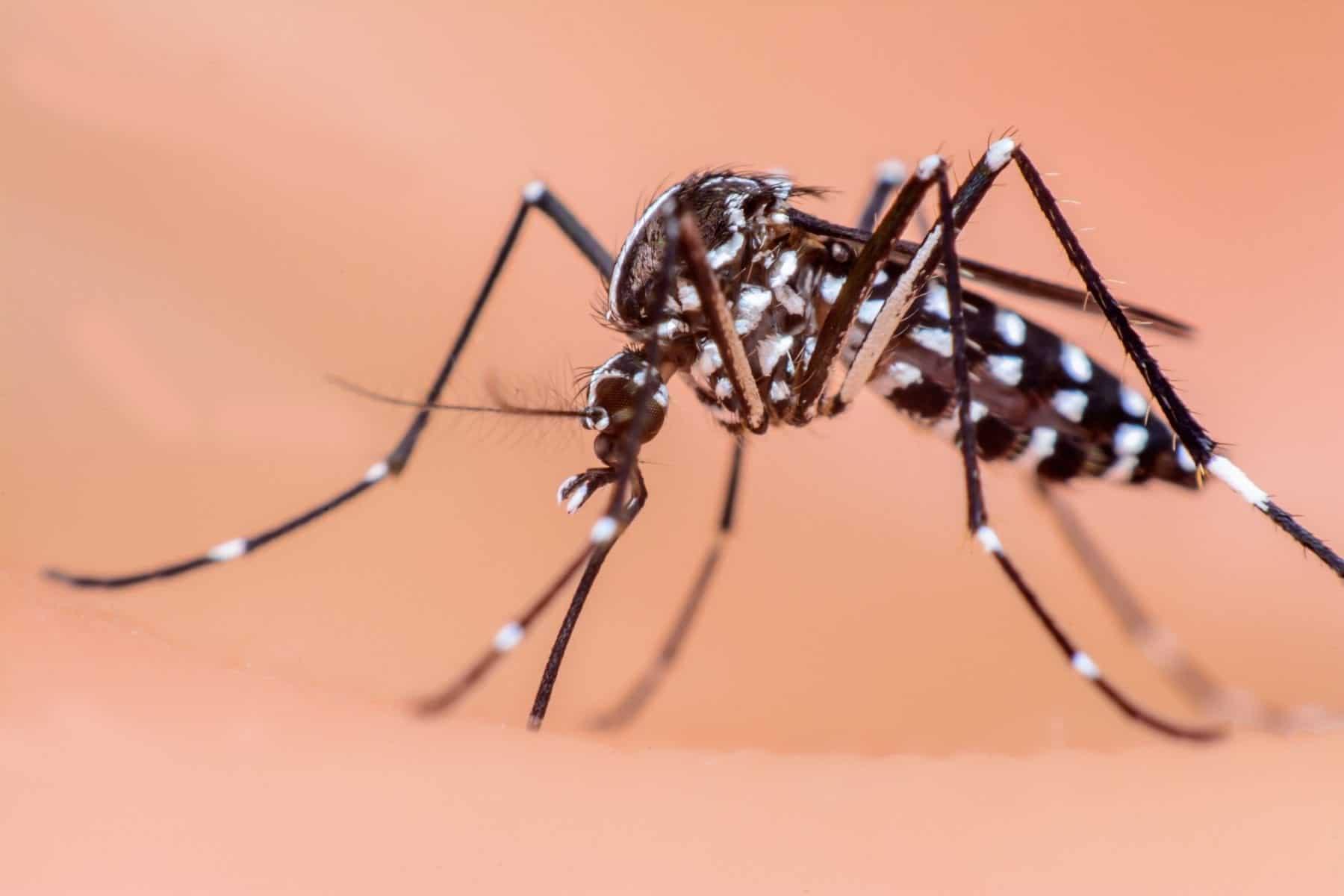 Mosquito-Control-Jackson-Madison-Mosquito