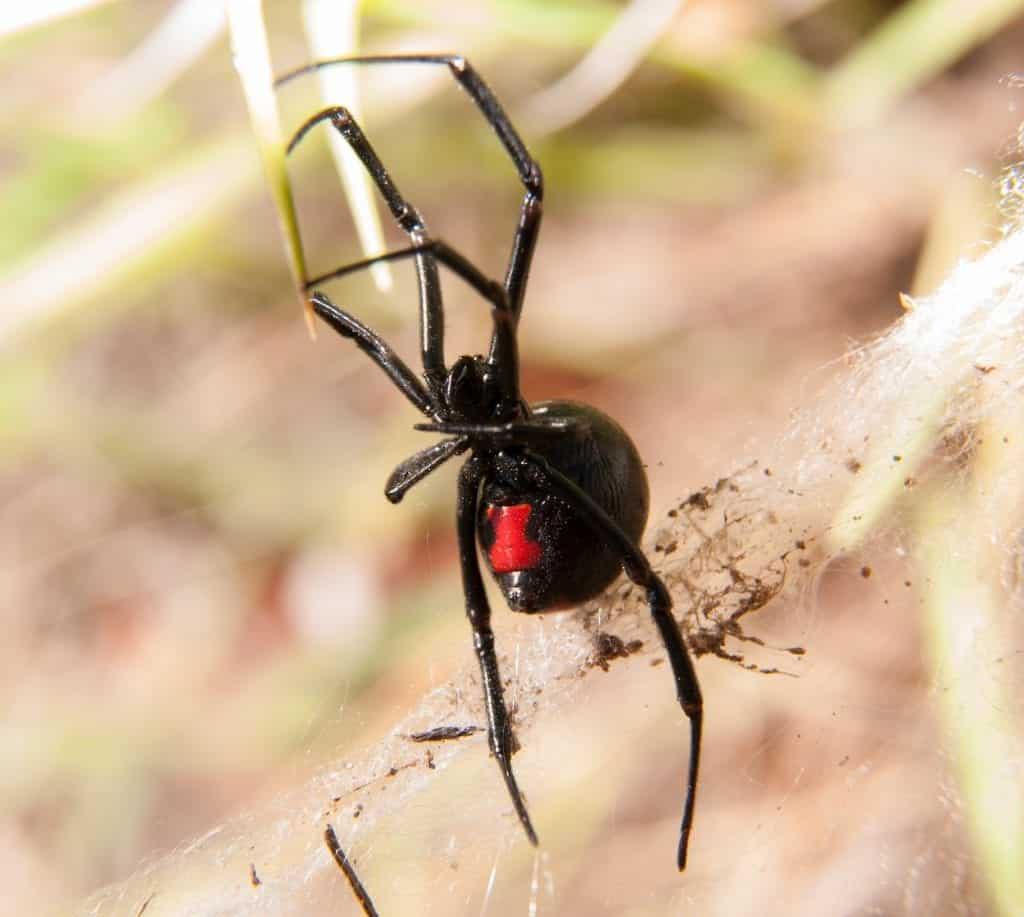 spider-control-mississippi