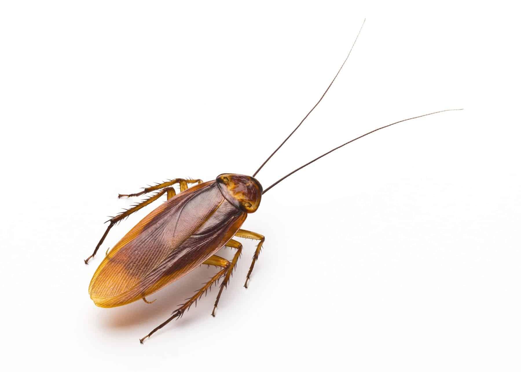 cockroach exterminator near me