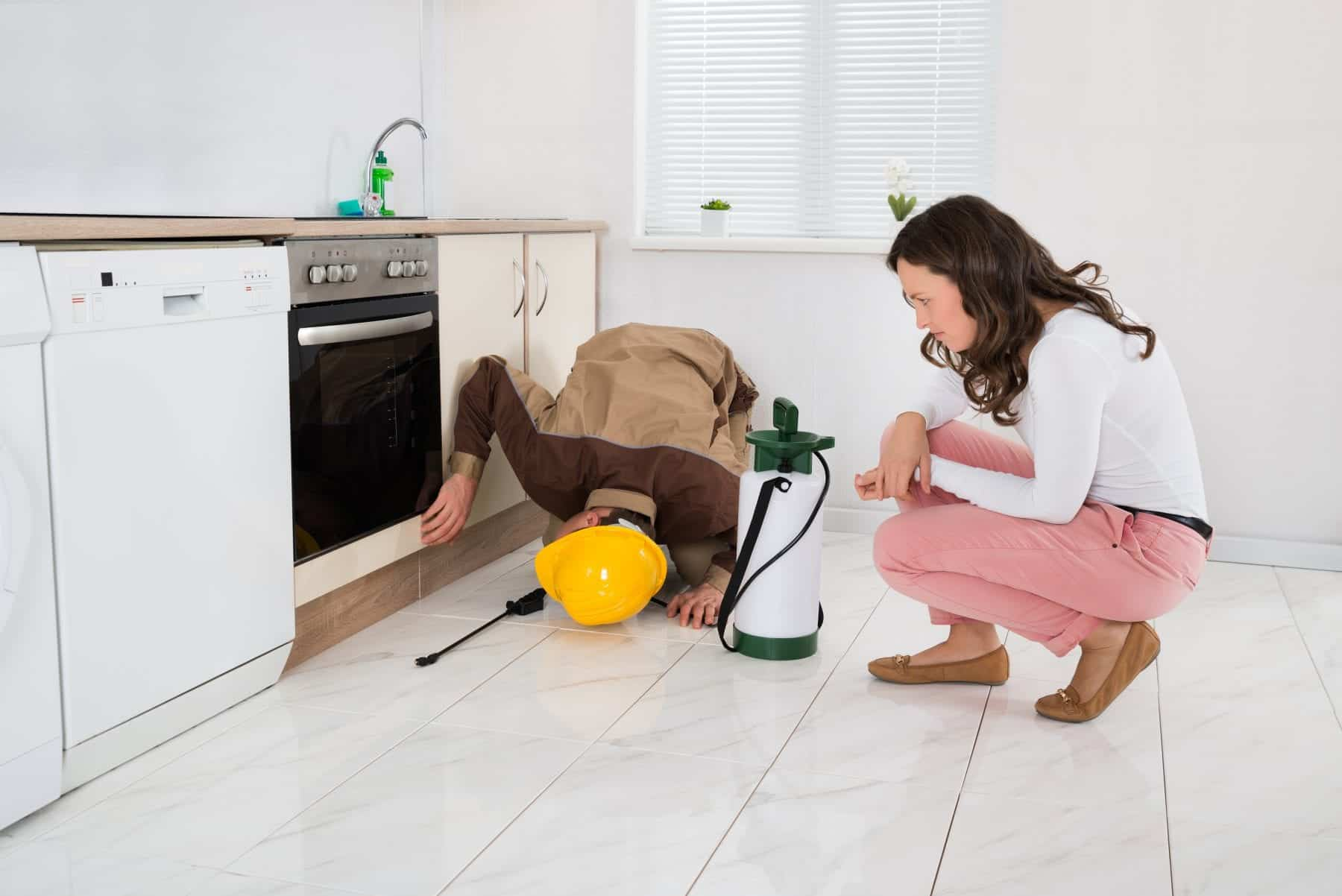 Young Woman And Worker With Pesticide Sprayer In Kitchen At Home