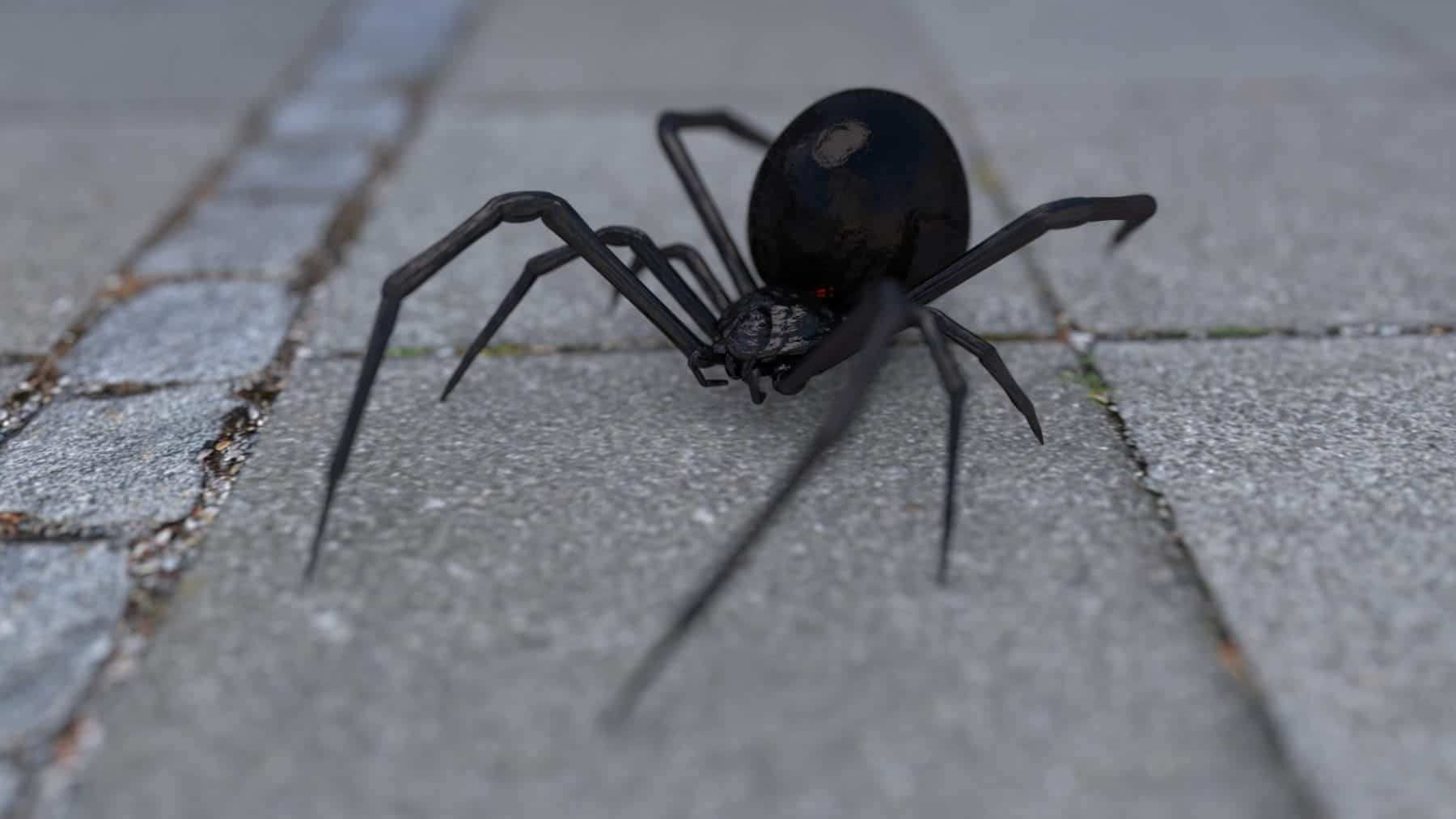 is spider poisonous