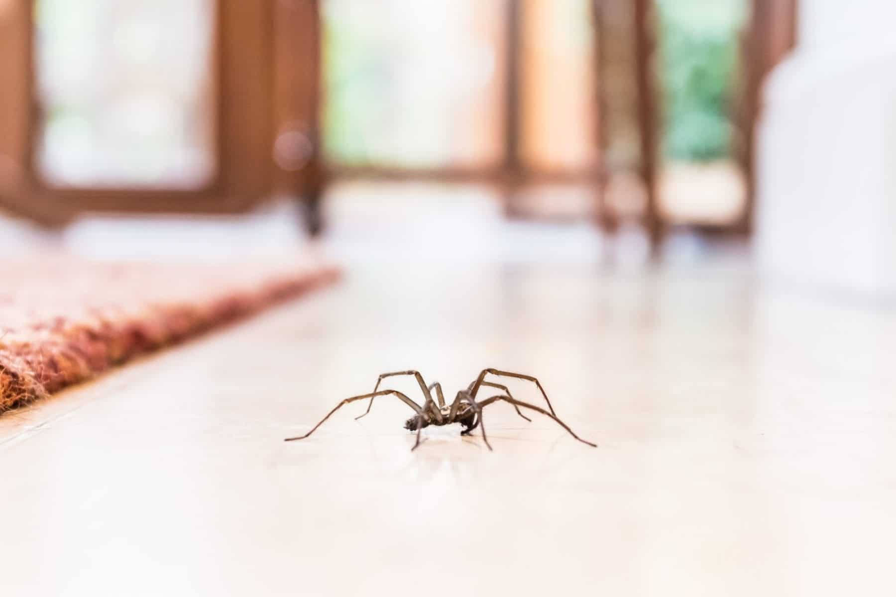 spider-repellent-ideas-to-keep-spiders-and-webs-away