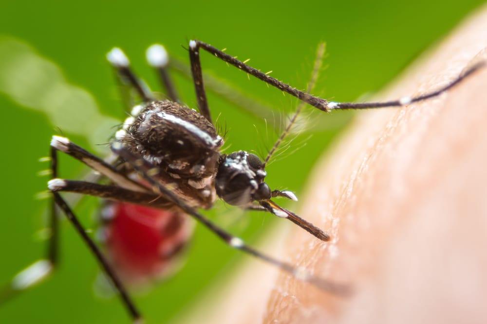 Super,Macro,Dangerous,Zica,Virus,Aedes,Aegypti,Mosquito,On,Human