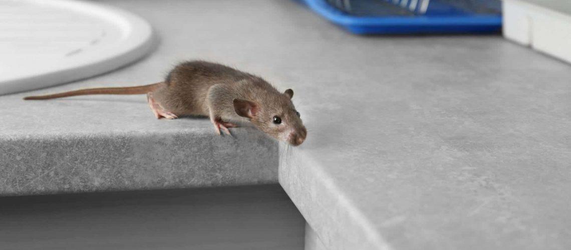 Cute little rat on table near sink