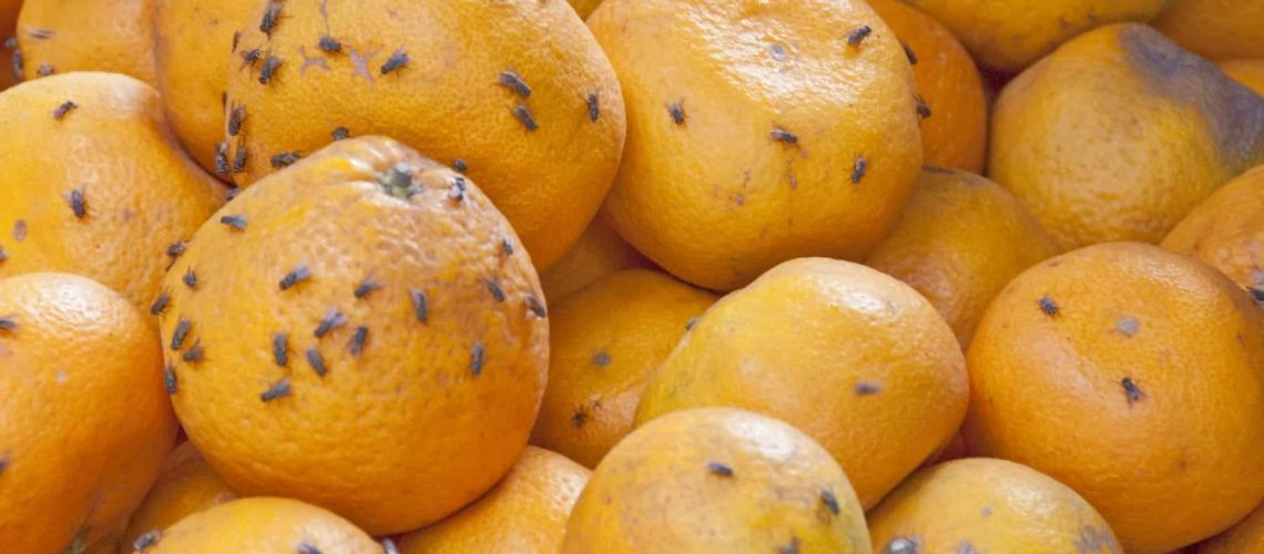 Rotten oranges in a market of Mui Ne, Vietnam.