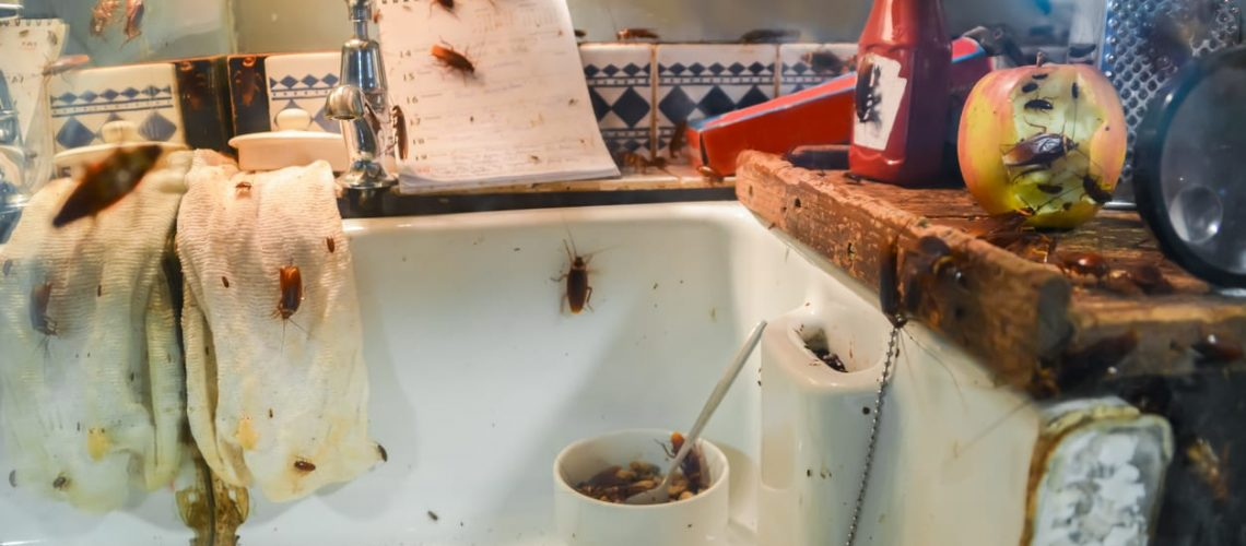 Cockroaches in a dirty kitchen. Dirty dishes. Leftove.