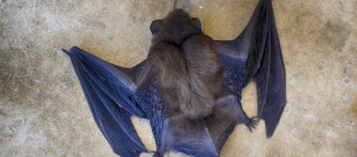 8-factors-behind-bat-removal-cost