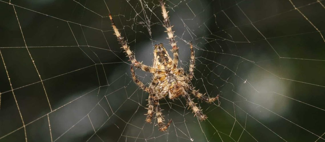 spider control jacksonn ms