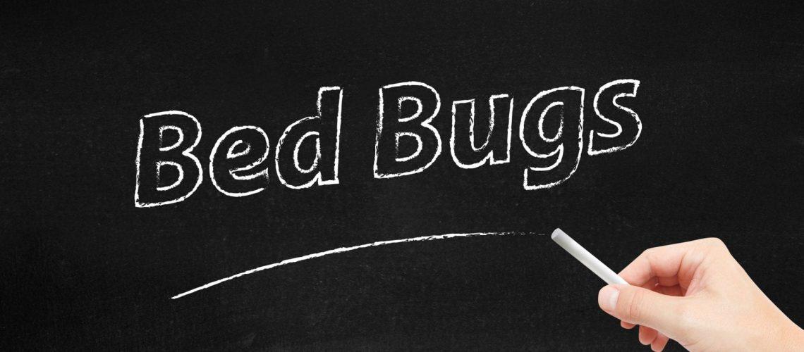 Bed Bugs written on blackboard