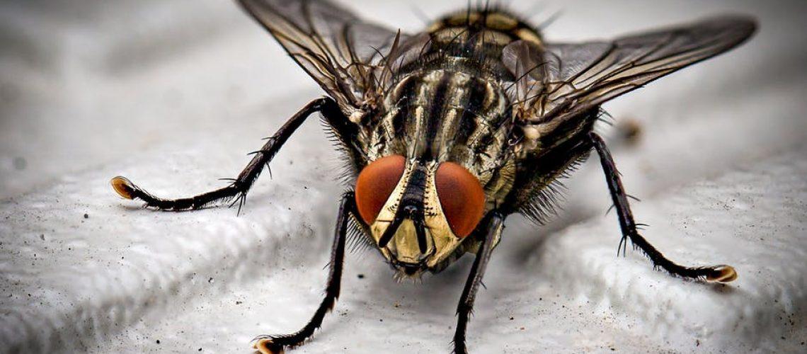 fly infestation jackson ms