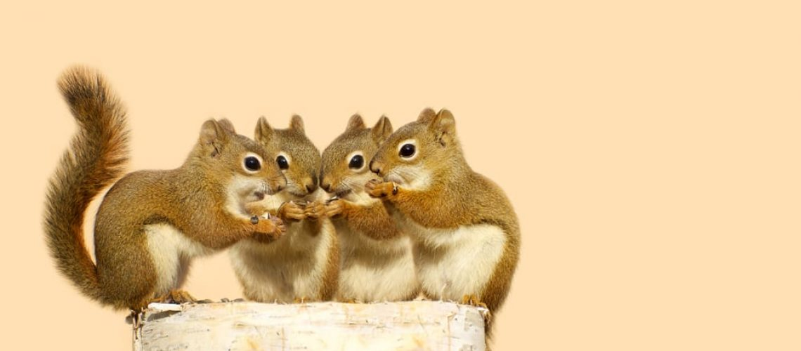 Four,Baby,Squirrels,On,A,Birch,Log,Sharing,Some,Sunflower