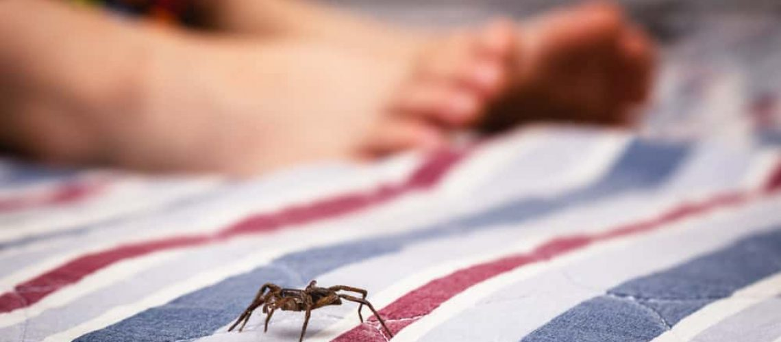 Brown,,Poisonous,Spider,Near,The,Feet,Of,A,Child.,Spider