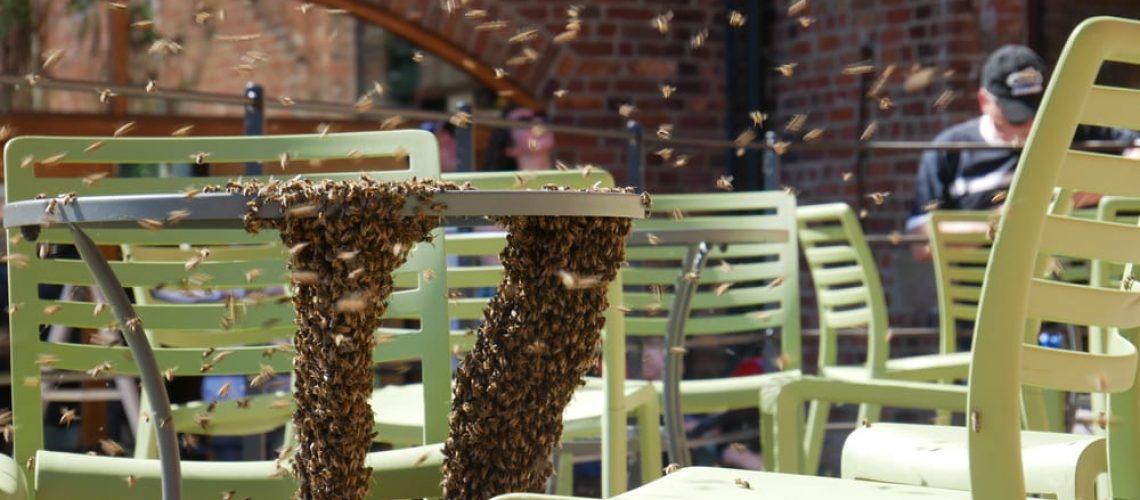 Weston,,Shropshire,/,Uk,-,17th,June,2017:,Bee,Swarm