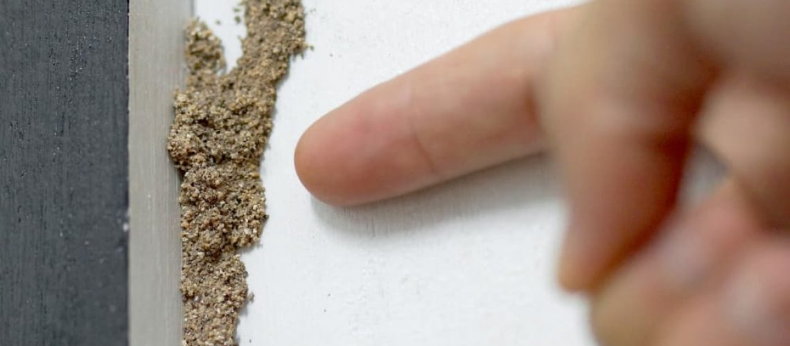 Hand,Pointing,At,A,Termite,Nest,On,Wooden,Wall,Of