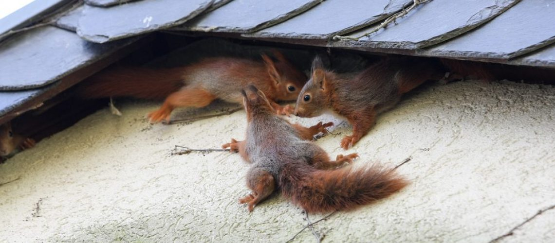 Young,Squirrel,At,House,Wall