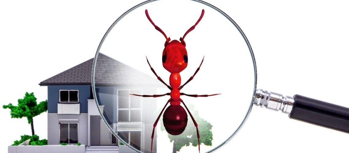 Pest,Control,Of,Residence,Concept.,3d,Rendered,Fire,Ant.