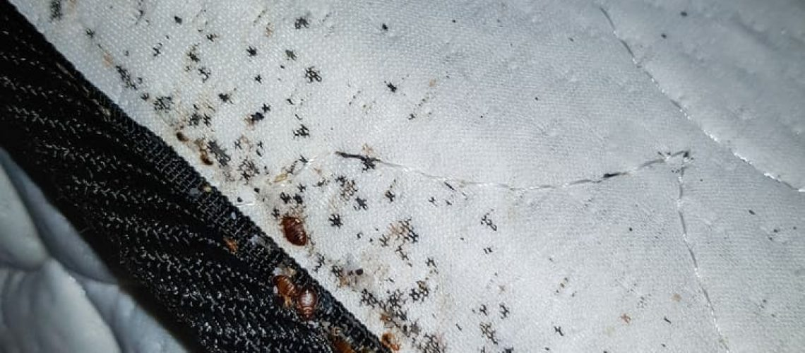 Bedbugs,And,Bed,Bug,Eggs,On,A,Bed,Mattress