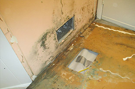 Mold Inspection Professionals! Contact Synergy Response, serving Austin, TX