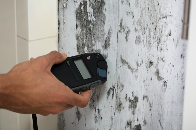 10 Interesting Mold Facts!: Did you know that there are 3 distinct types of mold? This is just 1 of 10 interesting mold facts we list and explain in this article. Pay particular attention to facts 1, 3, 7, and 10!