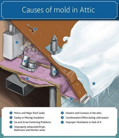 Got Attic Mold Questions?