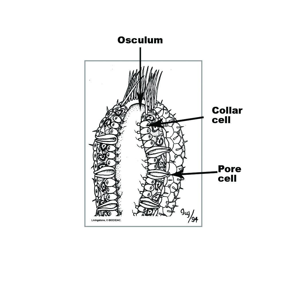 hight resolution of sponge diagram labelled
