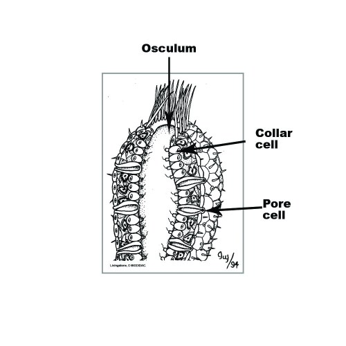small resolution of sponge diagram labelled