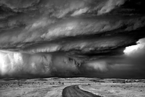Bear's claw - Wyoming 2010. By Mitch Dobrowner © Shirley Saunders with CCLicense