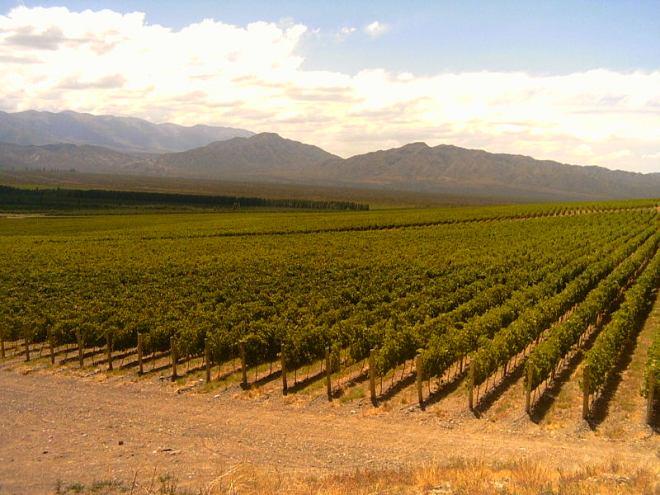 Vineyard in San Juan Province, Argentina © Ariel-SJ