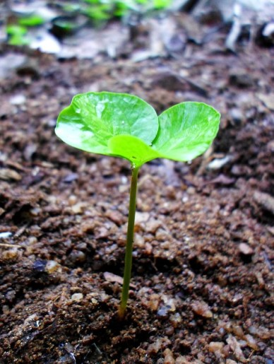 sprout-242574_640