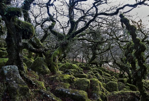 Wistman's Wood, Dartmoor, England © mattharvey1 with CCLicense