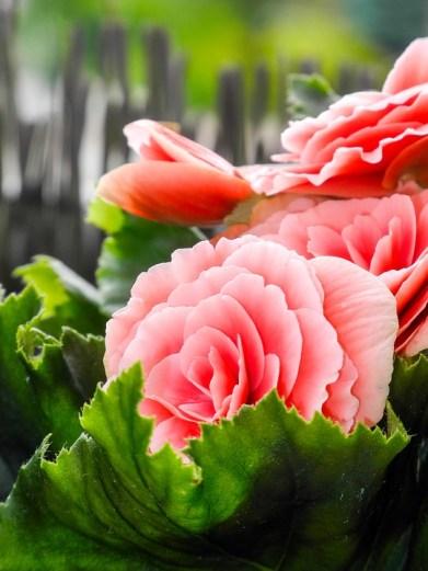 rose-1122747_960_720-1.jpg