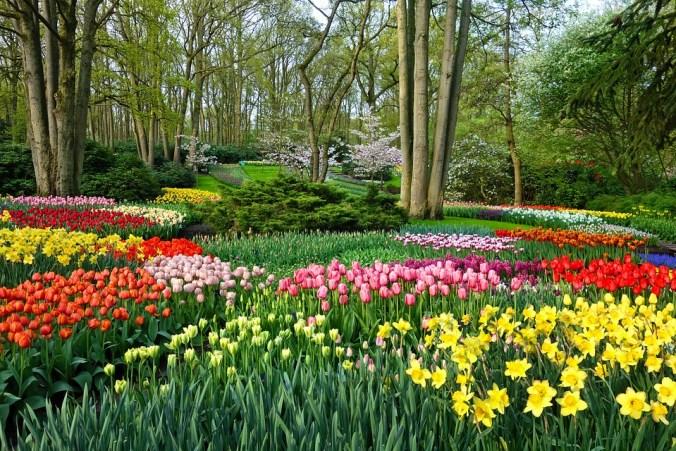 Daffodil Flower Garden Garden Flower Bed Tulip