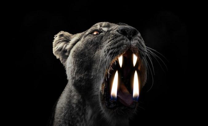 Black-Lion-Flame-Wild-Light-Danger-Candle-Energy-2103456[1].jpg