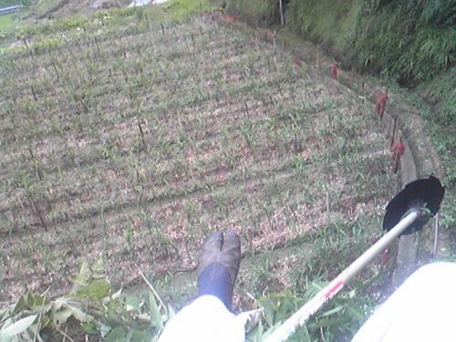 草刈り・空中戦