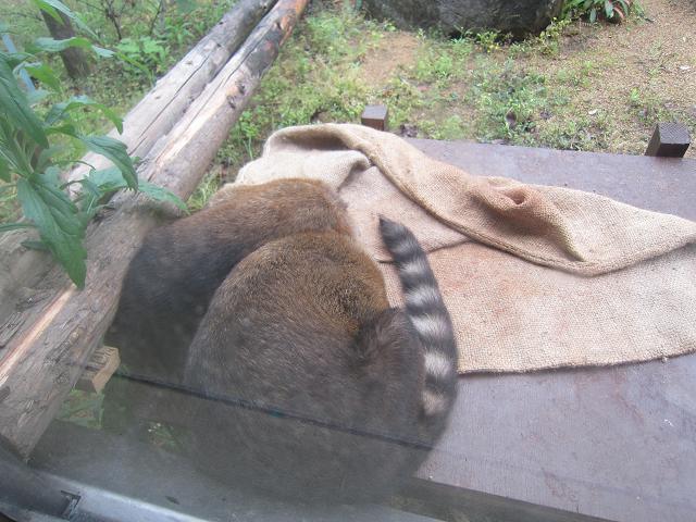 とくしま動物園 EP2/おねむの時間