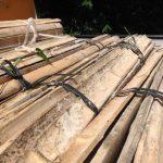 生姜栽培、台風対策における基本的かつ重要項目「杭を打て!」