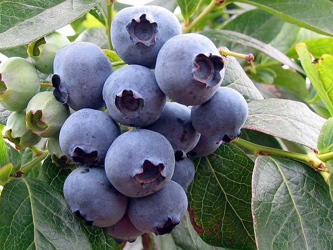 果物の表面に付いている白い粉は