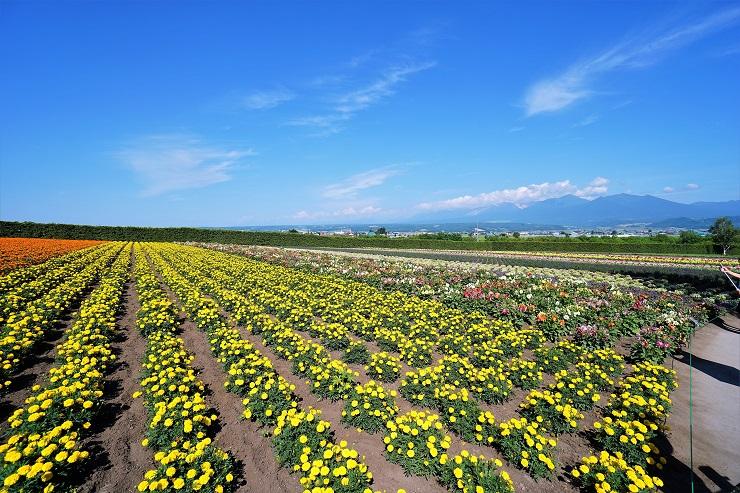 春の彩りの畑