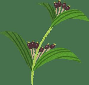 atopic-kanpoyaku