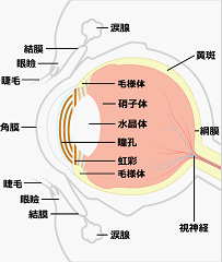 moumakuhakuri-genin