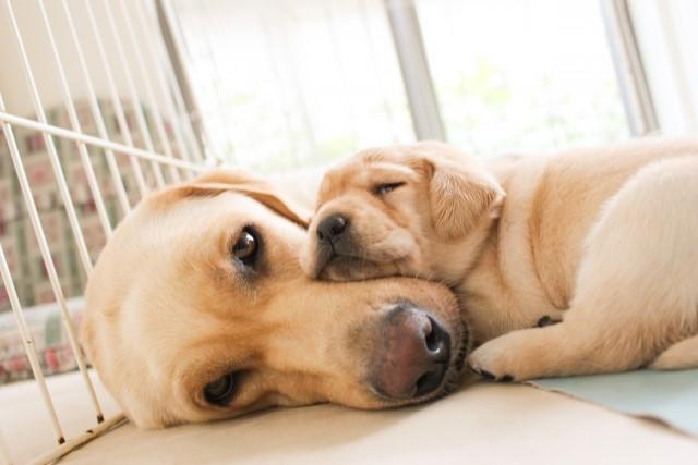 犬の腎不全の余命は?点滴治療や食事・末期症状について