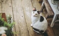 猫のトリコモナスの原因や症状と検査法【猫から人に感染?】