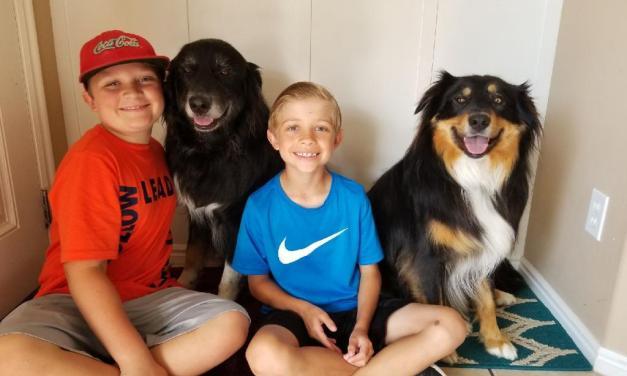 Precious Pets –  Bear and Toby